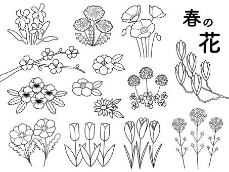 봄 꽃 흑백