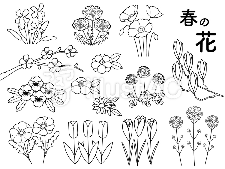 春の花モノクロイラスト No 1330362無料イラストならイラストac