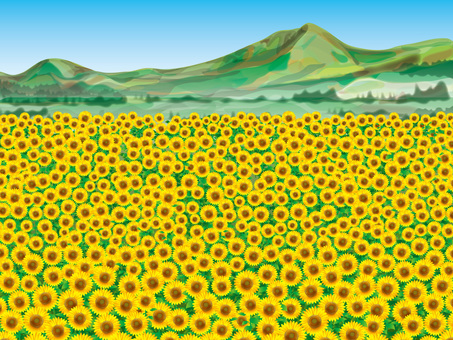 Sunflower field (7) mountain
