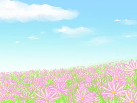 핑크의 꽃밭