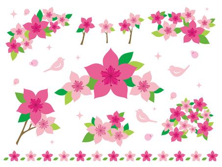 杜鹃花的插图集合