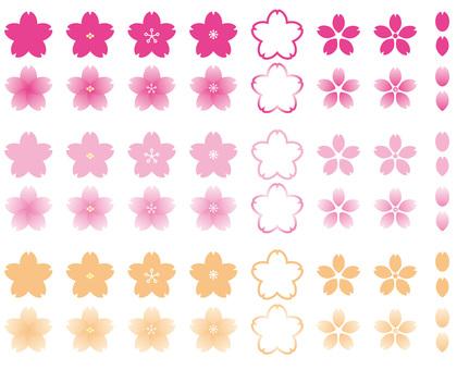 櫻花正面視圖
