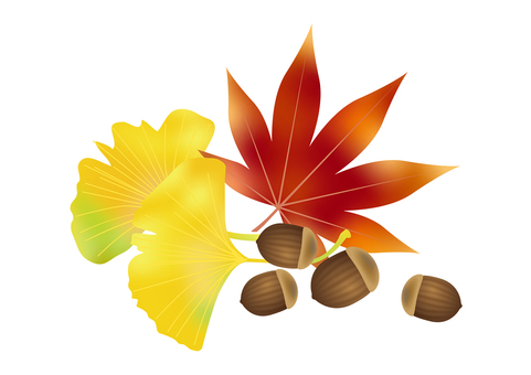 Accor and autumn leaves ginkgo 1