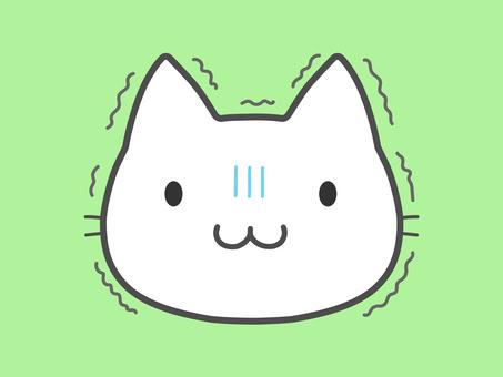 White cat, chill, cold