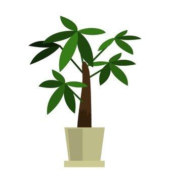 Houseplant 8