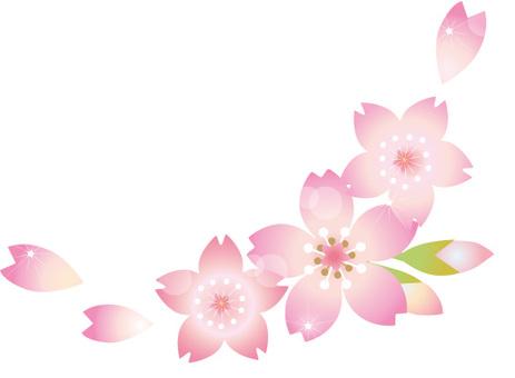 Cherry blossoms Flower shining