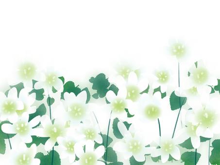 雪割草, 三角草