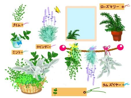 Herbal companions