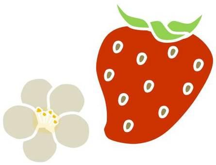Strawberry 05