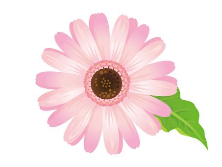 Pink gerbera flower clipping