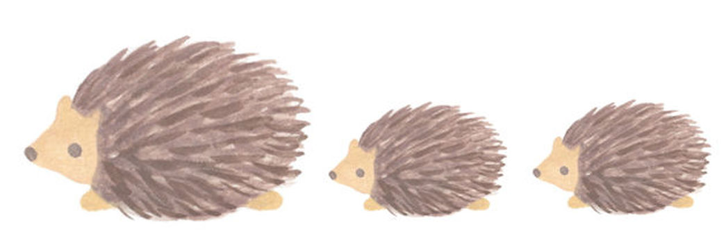Hedgehog parent and child