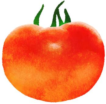【Tomato】