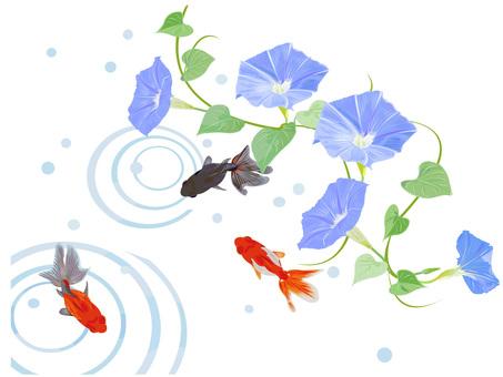 アサガオと金魚 3