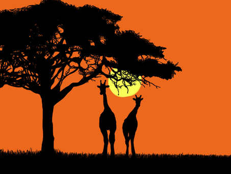 Sunset of savanna