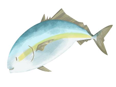 魚/ yellow