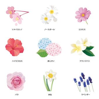 여러가지 꽃