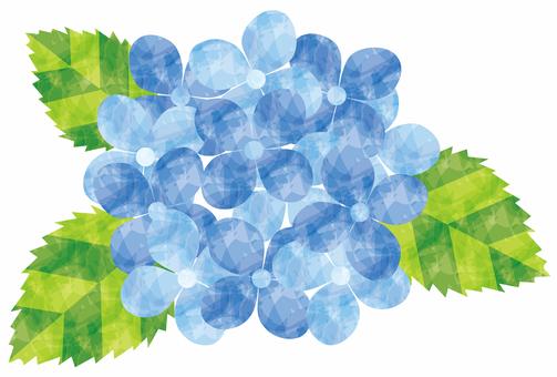 Hydrangea / blue