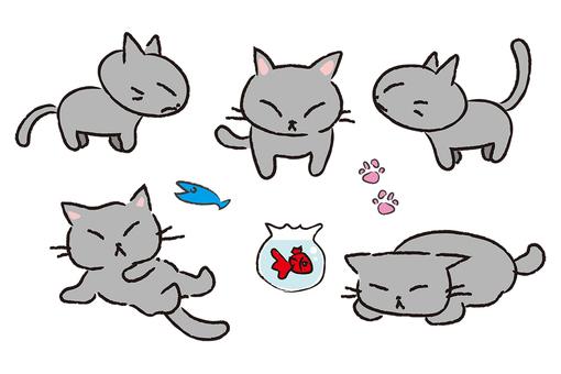 Gray cat posing in various ways