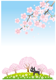 Cat and cherry blossoms scenery