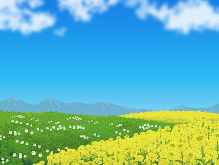 Nanohana and Clover's blue sky Hara Plant Landscape 02