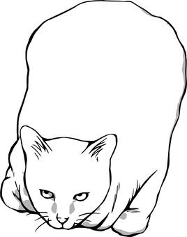 Cats barrel sitting monochrome white cat