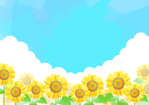 Pastel color sunflower background 3