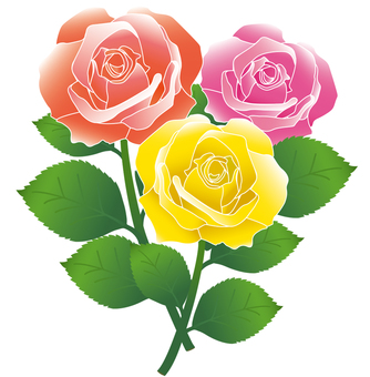 3 colors rose
