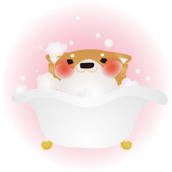 Shiba Inu Bath