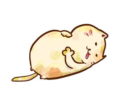 고양이 충만