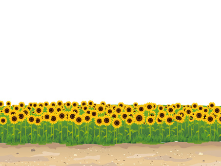 (RGB) Summer Sunflower Field and Momentary Background 02