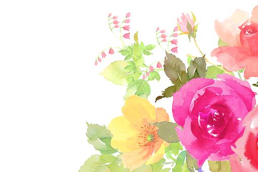 Flower roses