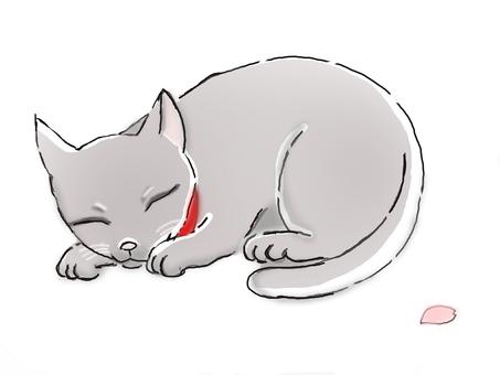 Red collar cat