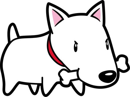 Dog _ Bull Terrier