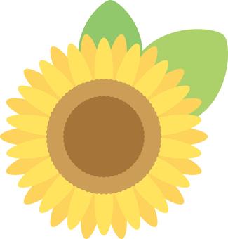 Sunflower (one point)