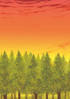 Evening forest (vertical)