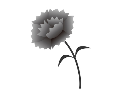 Carnation (monochrome)