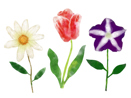 Watercolor flower picture book 3