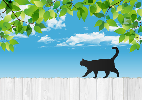 Fresh green with black cat and white wooden fence
