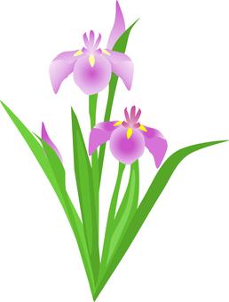 Sho-boku flower