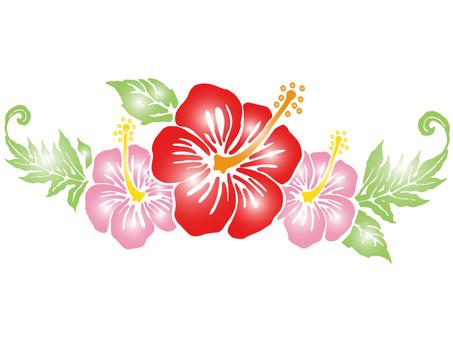 Hibiscus-016