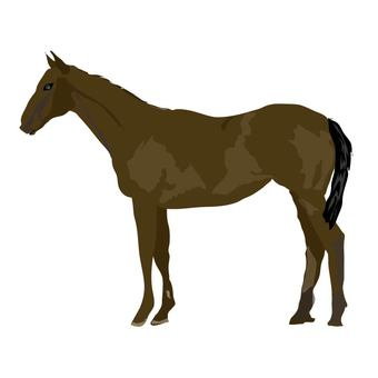 Horse illustration of the year 2014 New Year's card