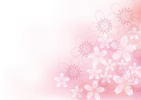 벚꽃의 꽃 51