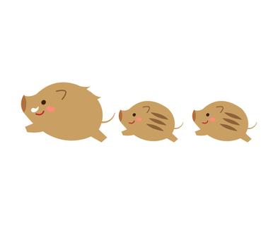 멧돼지 친자