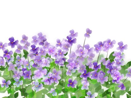 Large Purple Ribbon Flower (Oia Araseiu)