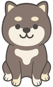 Shiba Inu 02
