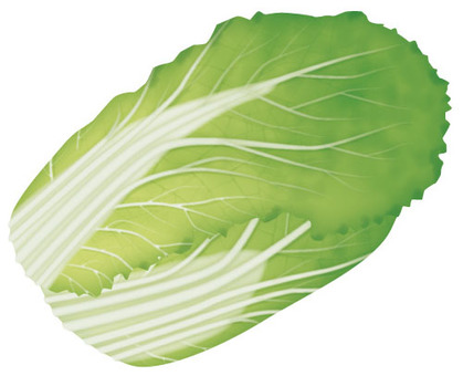 Chinese cabbage 2 / vegetables