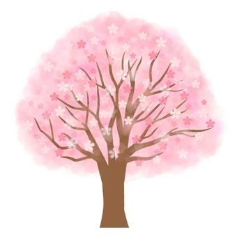 Cherry tree (full bloom)
