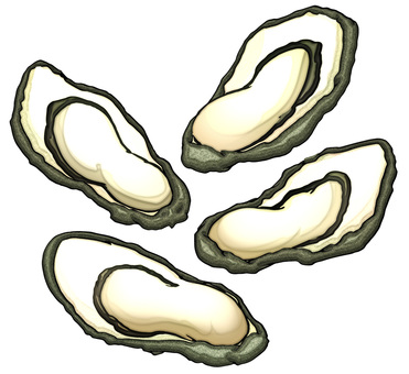Oyster / oyster / raw oyster
