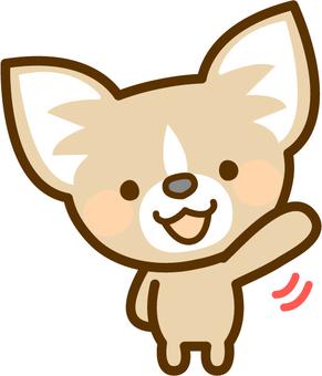 Chihuahua waving hands