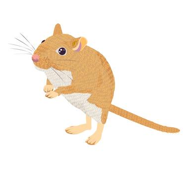 조디악 쥐